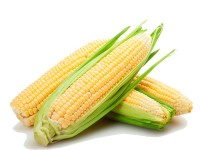 بذر ذرت شیرین