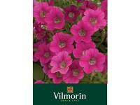 بذر گل اطلسی صورتی ویلمورین